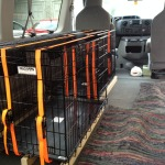 Rear View - Dog Crate Installation